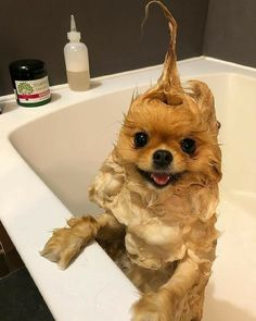 Cute Baby Dogs, Super Cute Puppies, Baby Animals Super Cute, Cute Little Puppies, Cute Dogs And Puppies, Cute Little Animals, Doggies, Baby Puppies, Cute Pups
