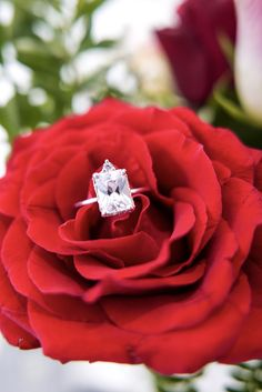 #jewelry #necklace #emmaisraelsson #diamond #gift #18K #ss18 #spring #news #newin #swedishdesign #inspo #styleinspo #spring2018 #bracelet #ring #engagementring Swedish Design, Engagement Rings, Diamond, News, Rose, Spring, Bracelets, Flowers, Plants