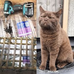 Cozmo is a little trouble maker and found a way to scale the 6ft fence and trellis so I had to come up with a DIY way of stopping him. This photo was taken just after he realised what I had just done  http://ift.tt/2nxmolG