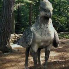 Buckbeak is my favorite hippogriffs are so cute