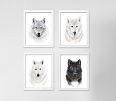 Wolf Art Print Set - Features Wolves of St. Francis - Achilles, Lapua, Meeko and Mystery - Various Sizes. Set of four wolf art prints of portraits taken from my original watercolors of the wolves of St. Francis, Achilles, Lapua, Meeko and Mystery. 25% of proceeds is donated to benefit Saint Francis Wolf Sanctuary. QUALITY: Wolf Nursery prints printed with highest quality archival inks and fine art papers to ensure print set will last and be enjoyed for years to come. DETAILS: Choose 5x7...