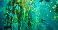 #OCEAN #SHAREMYSEA vert et turquoise! | www.ShareMySea.fr