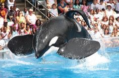 Tilikum  He belongs in the Ocean with his family. He is far to big for that pool. He is very unhappy at SeaWorld!