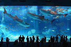 The Okinawa Churaumi (The World's Second Largest Aquarium)