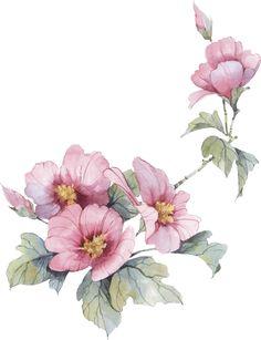Flower Images, Flower Pictures, Flower Art, Botanical Drawings, Botanical Illustration, Botanical Flowers, Botanical Art, Watercolor Flowers, Watercolor Paintings