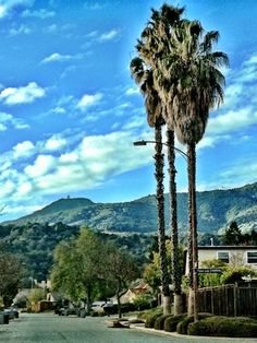 Almaden, San Jose, CA ♥ the surrounding hills, blue skies & weather are forever imprinted on my heart!  ♥