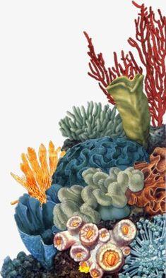 Arte Coral, Coral Reef Art, Sea Life Art, Sea Art, Coral Watercolor, Watercolor Paintings, Coral Drawing, Fish Tank Themes, Sea Plants