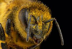 Bugging out: How rampant online piracy squashed one insect photographer