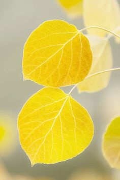 New flowers yellow leaves ideas Tree Leaves, Plant Leaves, Macro Flower, Autumn Scenes, Grey Yellow, Orange Brown, Orange And Purple, Green And Gold, Yellow Leaves