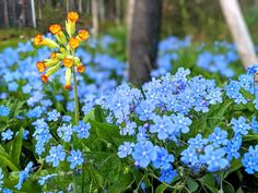 Plants, Garden, Pictures, Garten, Planters, Gardening, Outdoor, Home Landscaping, Plant