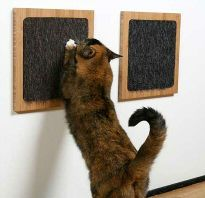 Stop your cat to scratch your furniture with new scratching post.