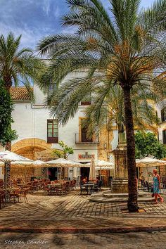 Palmed plaza in Jerez de la Frontera, Spain