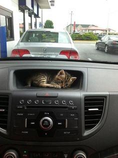 mettez un tigre dans votre moteur... et un chaton dans la boîte à gants !...
