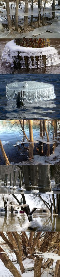 Ice Suspended On Trees From Winter Flooding