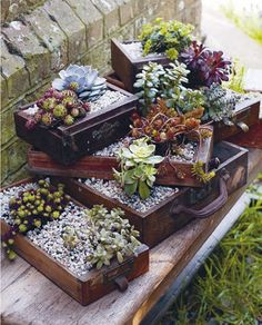 20 Succulent Planters You'll Love -