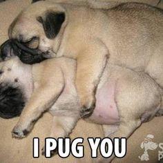 Love #pugs