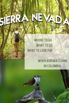 Here! The ULTIMATE COLOMBIA BIRDWATCHING GUIDE... Everything you need to know before coming to Colombia for birdwatching Birdwatching, Bird Species, Travel List, Continents, Where To Go, Conservation, South America, Tourism, Colombia