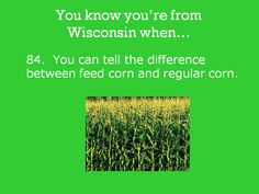 Actually, the difference between sweet corn and field corn. Wisconsin Funny, Wisconsin Cheese, Shawano Wisconsin, Finding Love, Good Ole, Hopeless Romantic, Green Bay, Milwaukee, Iowa
