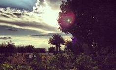 Beautiful picture of the sun rising at The Farm at #Agritopia in #GilbertAZ.