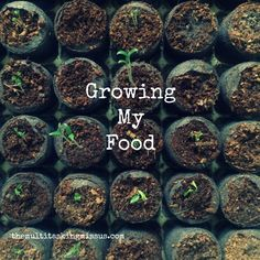 How I'm Growing My Own Food Indoors and You Can Too!