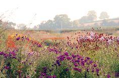 Garden at Hauser & Wirth (Somerset, England) by Piet Oudolf. Photo by Lisa Cox Garden Designs