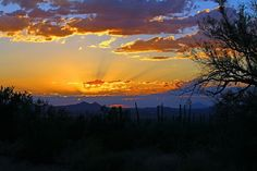 Explore Saguaro National Park, Arizona - Bucket List Dream from TripBucket