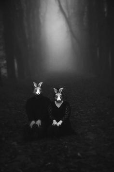 rabbit masked in foggy woods