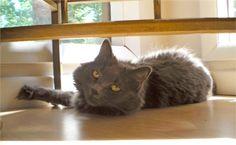 My cat Holly. Alyssa, Knoxville, TN - 7/27/2015