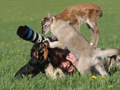 men-and-animals-