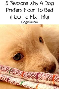 Is your dog rejecting that brand new (and expensive!) dog bed you just gave her. Find out why your dog sleeps on the floor instead of her bed! And how to curb that. #dog #dogbehavior Puppy Training School, Training Your Puppy, Dog Training Tips, Training Exercises, Expensive Dogs, Easiest Dogs To Train, Sleeping Dogs, Dog Behavior, Dog Photos