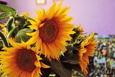 CÁCORkA: Slunečnicová Foto Blog, Plants, Pictures, Plant, Planets