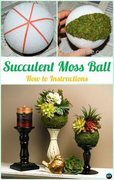 DIY Succulent Moss Ball Display Instruction- DIY Indoor #Succulent #Garden Ideas Projects