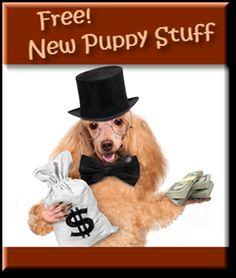 New Puppy Stuff
