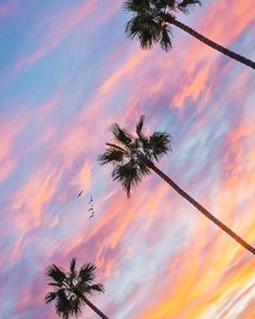 Palm trees callllifornia love ✌ beautiful sky, p Beautiful Sunset, Beautiful World, Beautiful Places, Beautiful Pictures, Videos Photos, Palmiers, Sky And Clouds, Paradis, Surfs Up