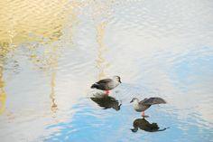 Tori-nanban209(birds time) Photo by hitoshi matsumoto -- National Geographic Your Shot