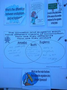Biology notebook-variety of study ideas high school level