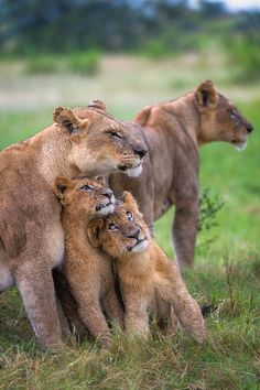 Hello Mom ! Photo by Andrew Schoeman -- National Geographic Your Shot