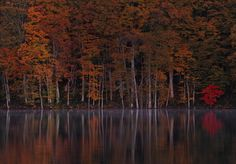 鏡張りの様はまるでウユニ塩湖!青森県「蔦七沼」の紅葉が美しすぎる | RETRIP