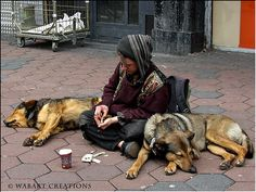 Homeless with dogs