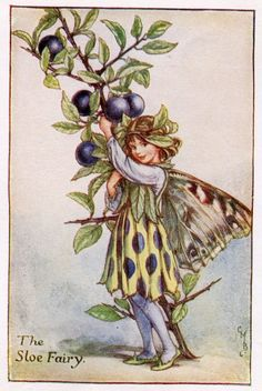 Prunelle fleur fée Vintage d'impression, c.1927 Cicely Mary Barker livre plaque Illustration
