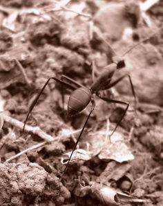 Atom Ant, Matheran