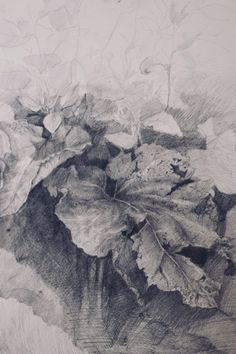 https://vk.com/academic_drawing?z=photo-9084693_456246814%2Falbum-9084693_00%2Frev