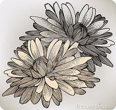 Chrysanthemum flower, hand-drawing. Vector illustr by Murka34, via Dreamstime