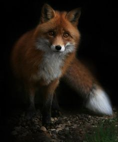 Image about nature in Cute Birds Animals by Shorena Ratiani, Nature Animals, Animals And Pets, Baby Animals, Cute Animals, Wild Animals, Beautiful Creatures, Animals Beautiful, Fuchs Illustration, Wolf Hybrid