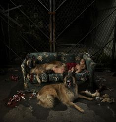 artwork: Children of a Lesser God, lightbox by Mat Collishaw on view at the Foundling Museum in London. Romulus And Remus, Broken Home, Wild Dogs, Dog Photography, Dog Art, Art World, Art Tutorials, Mythology, Photo Art