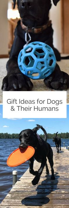Gift Ideas for Dogs and Their Humans - Pin