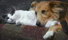 Remedio casero para eliminar el mal olor que dejan tus perros y gatos