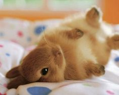 A tan rabbit rolling around on its back on a human bed.