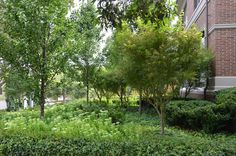 Capital Pear trees to flank the driveway Source: Eckersley Garden Architecture