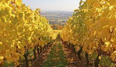 Oregon Wine in Willamette Valley - Tasting, Dining, Lodging & More #oregon #willamettevalley #wine